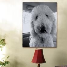 Picture Perfect Pet Photo Canvas
